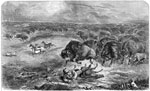 American Pioneers: A Narrow Escape from the Buffaloes