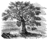 Colonial Connecticut: The Charter Oak
