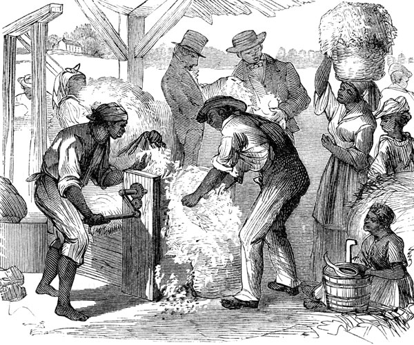 the history of the cotton gin History of cotton spinning cotton was first spun by machinery in england in 1730 the industrial revolution in england and the invention of the cotton gin in the us paved the way for the important place cotton holds in the world today.