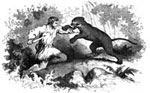 Davy Crockett Pictures: Colonel Crockett's Encounter with a Cougar