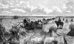 History of Agriculture: Harvesting on a Bonanza Farm