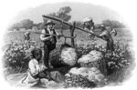 History of Cotton: Cotton Scene