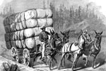 History of Cotton: Hauling Cotton to Market