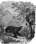 Kit Carson: Kit Carson Treed by a Hungry Grizzly