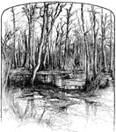 Seven Days Battles: A Sample of the Chickahominy Swamp