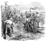 Slavery in America: A sugar plantation